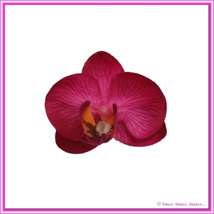 Artificial Flower Heads Silk Phalaenopsis Orchid Hot Pink 5cm - Box of 24