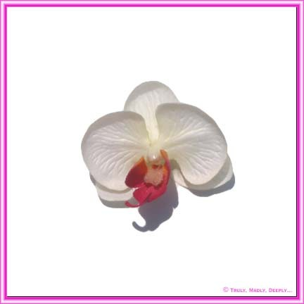 Artificial Flower Heads Silk Phalaenopsis Orchid White with Pink 5cm - Box of 24
